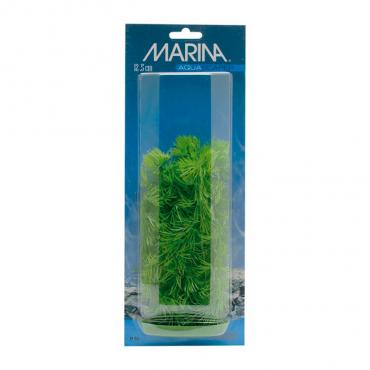 Planta Hornwort 12.5cm