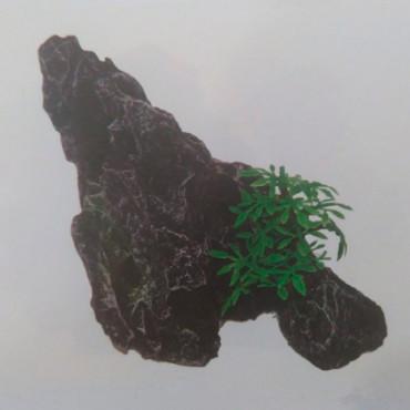 Rocha c/ Planta