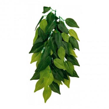Planta FICUS p/ Terrário