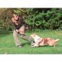 Disco/Frisbee DOG ACTIVITY