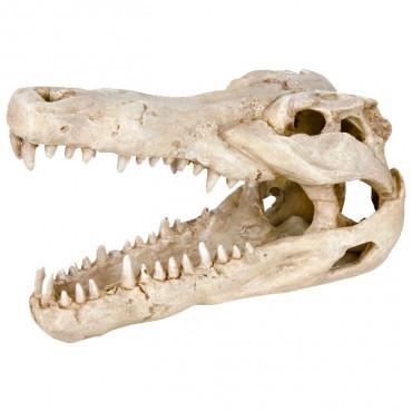 Crânio de Crocodilo