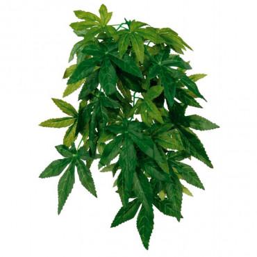 Planta p/ Terrário ABUTILON
