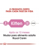 Ração para gato Royal Canin Kitten