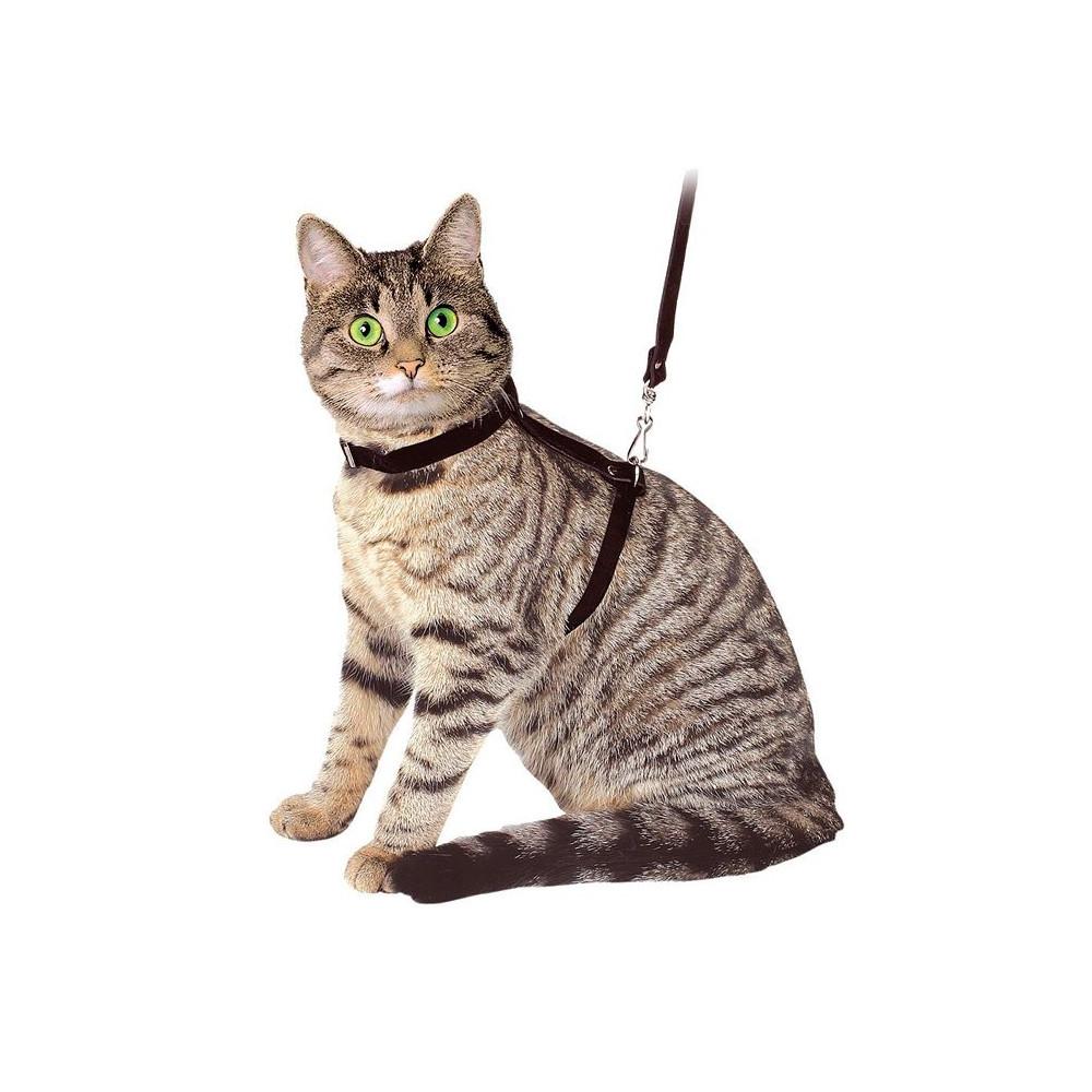 Peitoral + Trela p/ Gato
