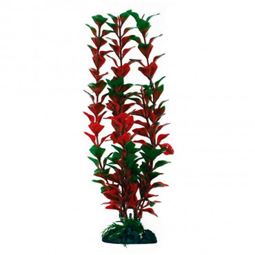 Planta Replica LUDWIGIA