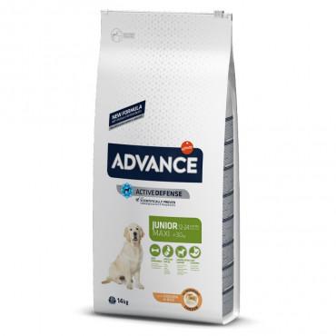 Advance Cão Junior Maxi - Frango e arroz