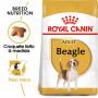 Royal Canin - Beagle