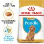 Royal Canin - Poodle Puppy - Ração de Cão   Goldpet