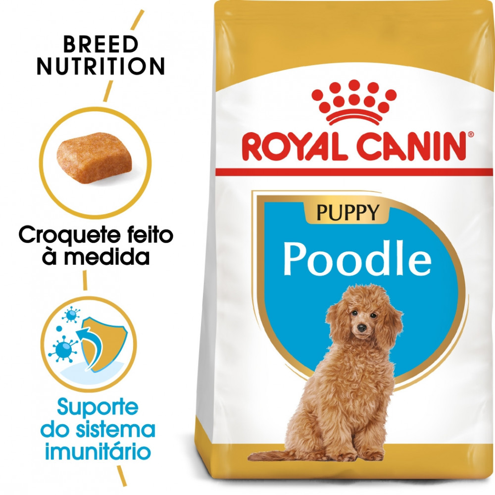 Royal Canin Poodle / Caniche Cão Puppy