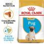 Royal Canin - Pug Puppy - Ração Seca Cão   Goldpet