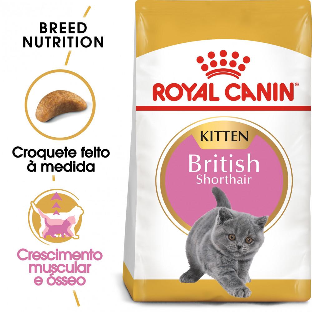 Royal Canin British Shorthair Gato Kitten