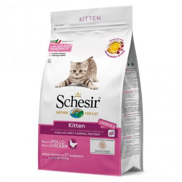 Schesir - Kitten