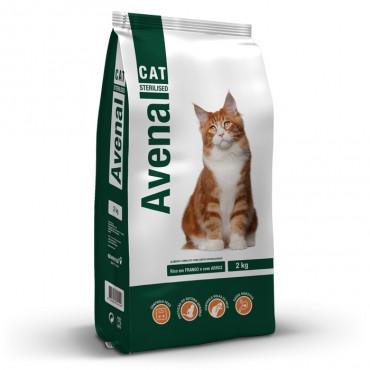 Avenal Gato adulto esterilizado
