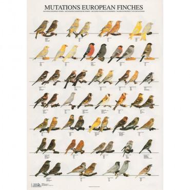 Poster Mutações Pássaros da Europa