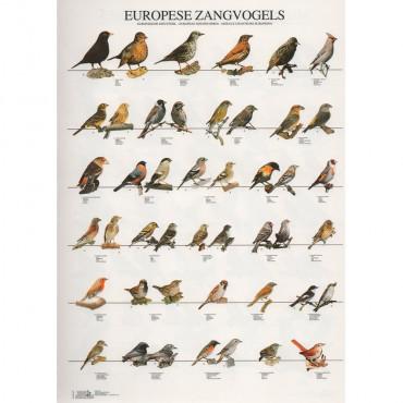 Poster Aves de canto da europa