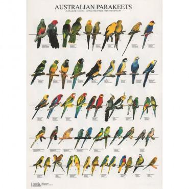 Poster Psitacídeos da Austrália