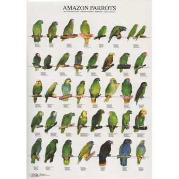 Poster Papagaios Amazonas