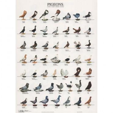 Poster Pombos Nº 2