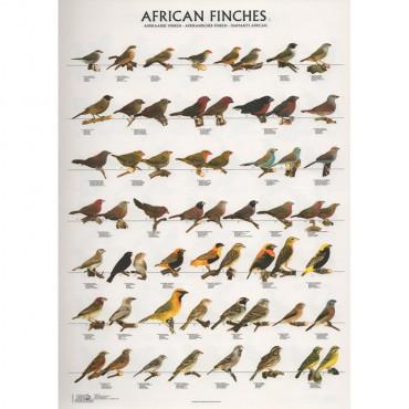 Poster Diamantes Africanos Nº 1