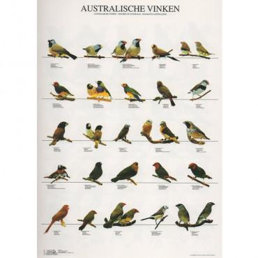 Poster Diamantes da Austrália