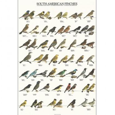 Poster Diamantes Sul-Americanos