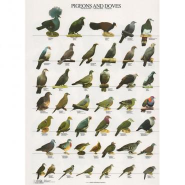 Poster Pombos e Rolas