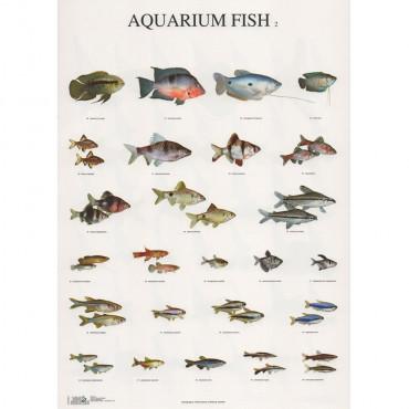 Poster Peixes Nº 2