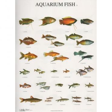 Poster Peixes Nº 3