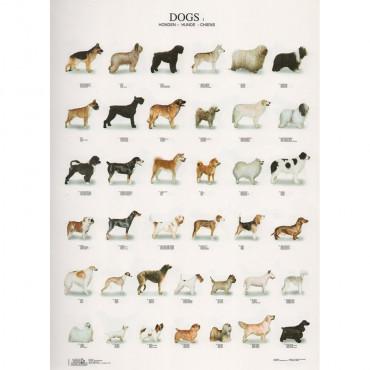 Poster Cães Nº 1