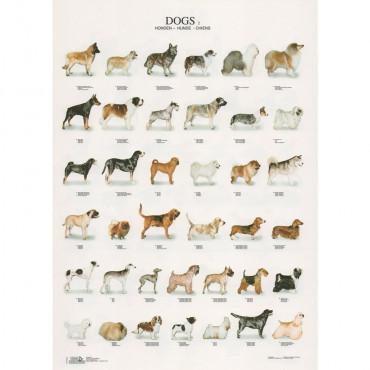 Poster Cães Nº 2