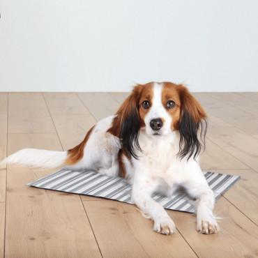 Tapete de arrefecimento às riscas para cão