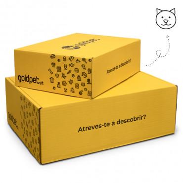 Goldbox Gato Kitten