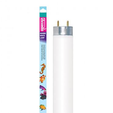 Lâmpada Marine White fluorescente - Arcadia