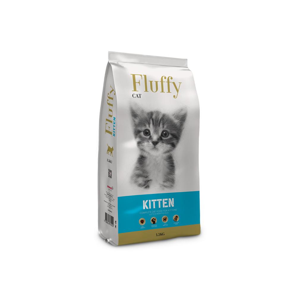 Fluffy Gato Kitten