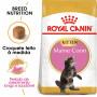Royal Canin Maine Coon Gato Kitten