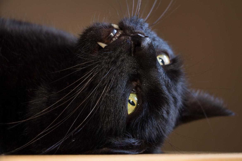 Gato preto ao longo da sua história