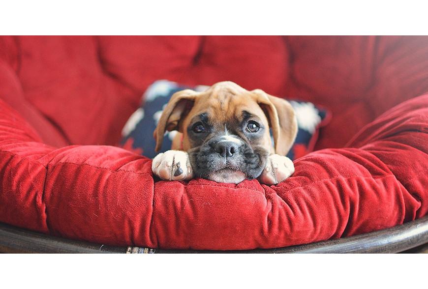 O que preciso de comprar para o meu novo cão?