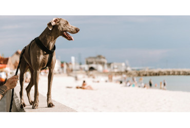 Dicas para um dia incrível na praia com o seu cão